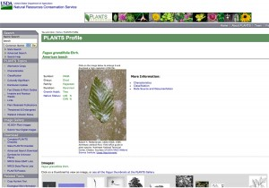 PlantsDotGovDatabase screen shot