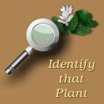Identify-That-Plant-logo