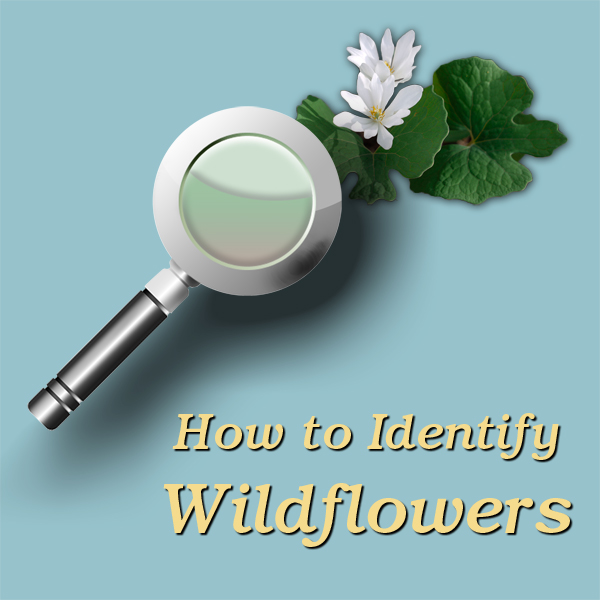 Wildflower-Course-logo