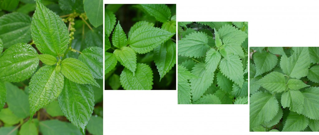 Four nettle leaves