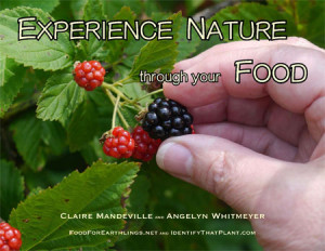 Experience Nature through Your Food cover